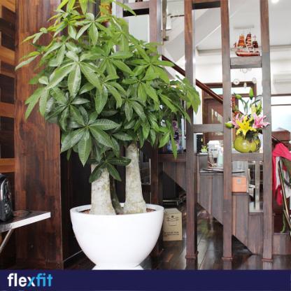 Vách ngăn gỗ mang đến cho phòng phòng khách vẻ đẹp sang trọng, gần gũi với thiên nhiên